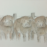 Waiting for dinner - original painting of farmyard pigs