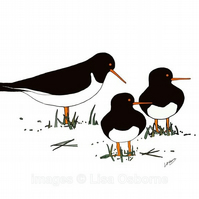 Oystercatchers - signed print of digital illustration of birds