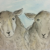 Good morning  - original watercolour, pen and ink of sheep