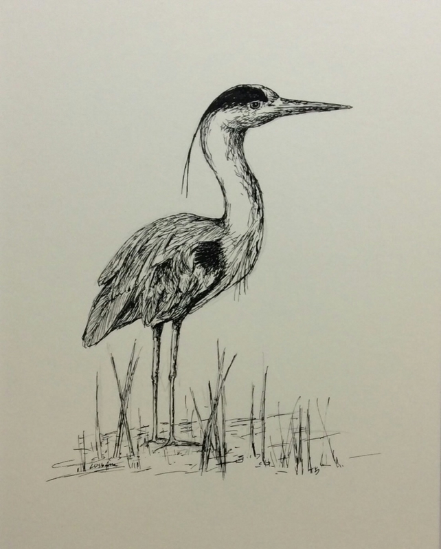 Pen and Ink of Heron - Just Waiting....