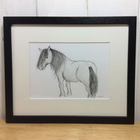 Highland pony - original illustration of pony - framed