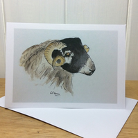 Blackface sheep - greetings card. Blank inside.