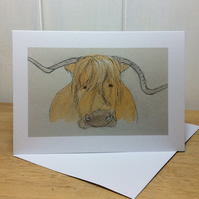 Blank greetings card - Highland cow