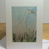 Greetings card - white runner duck. Pets. Ducks.