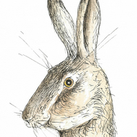 Surprised hare - signed print of hare