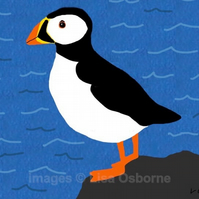 Puffin - signed print of bird from digital illustration
