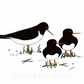 Oystercatchers - signed A4 print from illustration