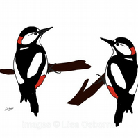 Woodpeckers - A4 signed print from illustration of birds