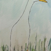 White runner duck - signed print