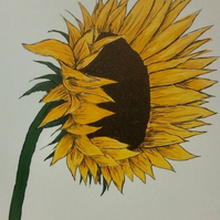 Sunflower - print from digital illustration