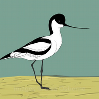 Avocet. Signed print. Digital illustration. Birds. Wildlife. Coast