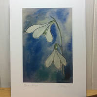 Snowdrops - signed print from watercolour painting