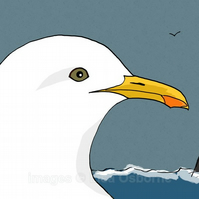 Gull - signed print from illustration
