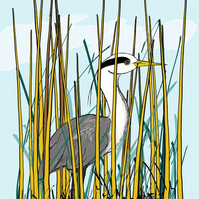 Heron in reeds - signed print from digital illustration