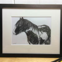 Old friend - charcoal drawing of a horse