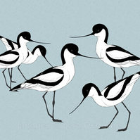 Avocets. Signed print. Digital illustration. Birds. Wildlife. Coast