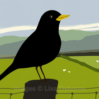 Blackbird - print from digital illustration. Wildlife. Garden bird.