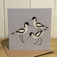 Avocets - greetings card. Birds. Wildlife.