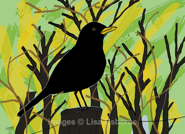 Blackbird. Signed print. Digital illustration. Wildlife. Garden birds