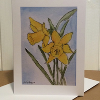 Daffodils - greetings card - blank for own message