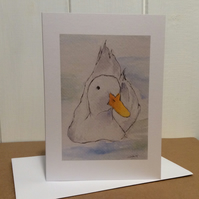 Duck - greetings card. Blank for your own message.