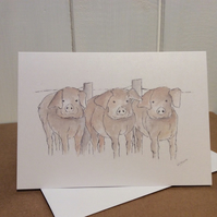 Pigs - greeting card. Blank inside. Farm animals.