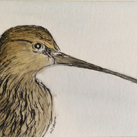 Curlew -original pen, ink and watercolour miniature. Birds. Wildlife