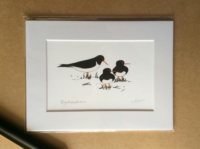Oystercatchers - print from digital illustration with mount