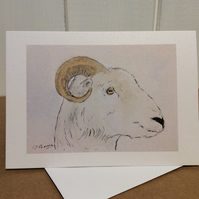 Ram - greeting card. Blank inside.