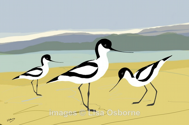 Avocets. Print. Digital illustration. Coastal. Birds. Wildlife