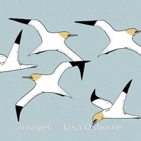 Gannets. Signed print. Digital illustration. Birds. Coast. Sea. Wildlife