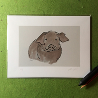 Pig - signed print from digital  illustration