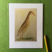 Brown runner duck - signed print from watercolour
