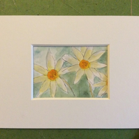 Daisies - original pen, ink and watercolour miniature of flowers