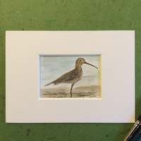 Curlew - original watercolour, pen and ink painting. Bird. Wildlife