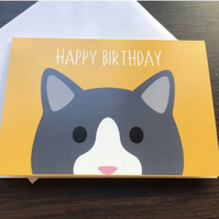 Colourful Cat Greetings Card