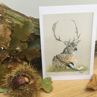 Recumbent Fallow Deer - Hand made wildlife cards