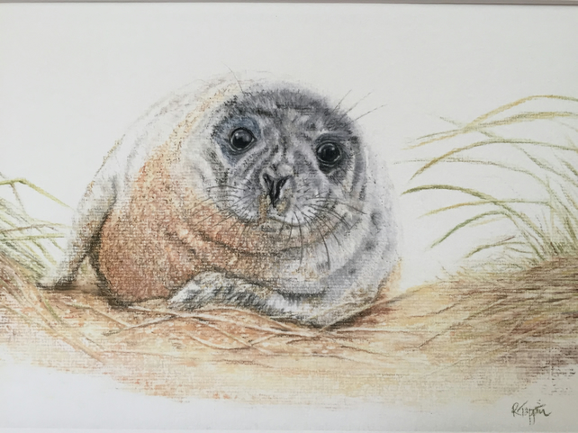 Limited Edition Giclee Print of Grey Seal in the sand dunes