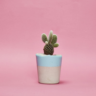 Concrete Cactus Pot Baby Blue, Small size and includes cactus or succulent