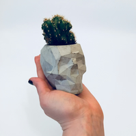 Geometric concrete skull planter