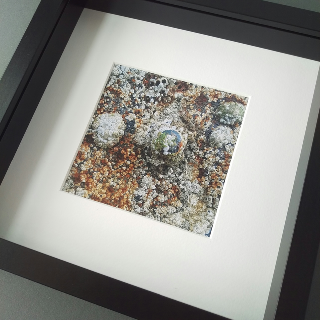 Barnacles and Rusty Bolts - Up Close Coast Framed Photograph