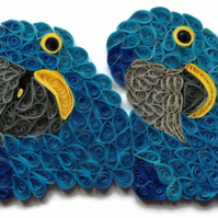 Hyacinth Macaw Card, Double Trouble