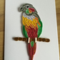 Green Cheeked Conure Card, Colourful Parrot