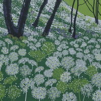 Wild Garlic Flowers, original hand-pulled screen print