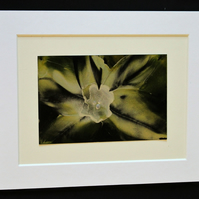 Original mounted white, cream and green encaustic wax flower