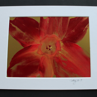 Original encaustic wax flower in red and gold, mounted