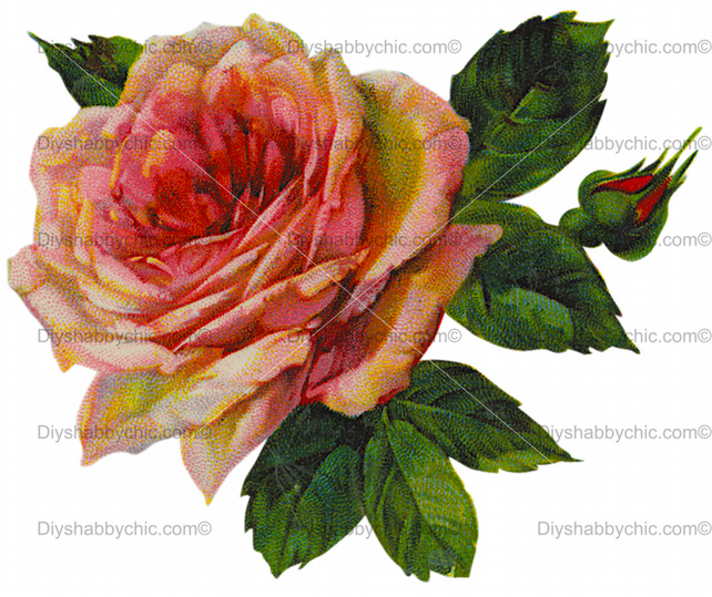Furniture Wood Decal Image Transfer Antique Label Flower Big Rose Diy