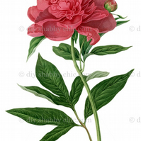 Furniture Wood Decal Vintage Image Transfer Antique Peony Diy