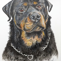 custom watercolour & ink painting of your pet