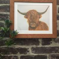 Print A4 Highland Cow & Solid Wood Frame